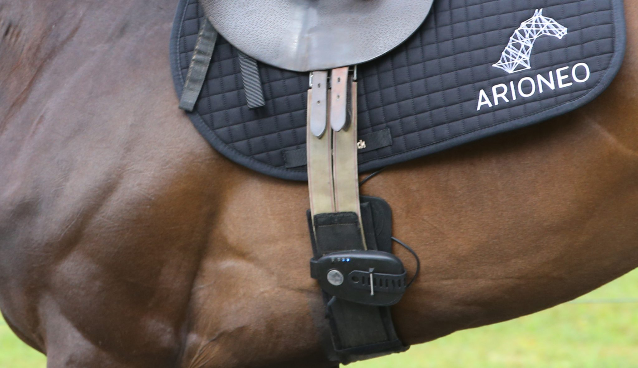 Arioneo and EQUIMETRE connected sensor fixed to the girth, during racehorses training sessions