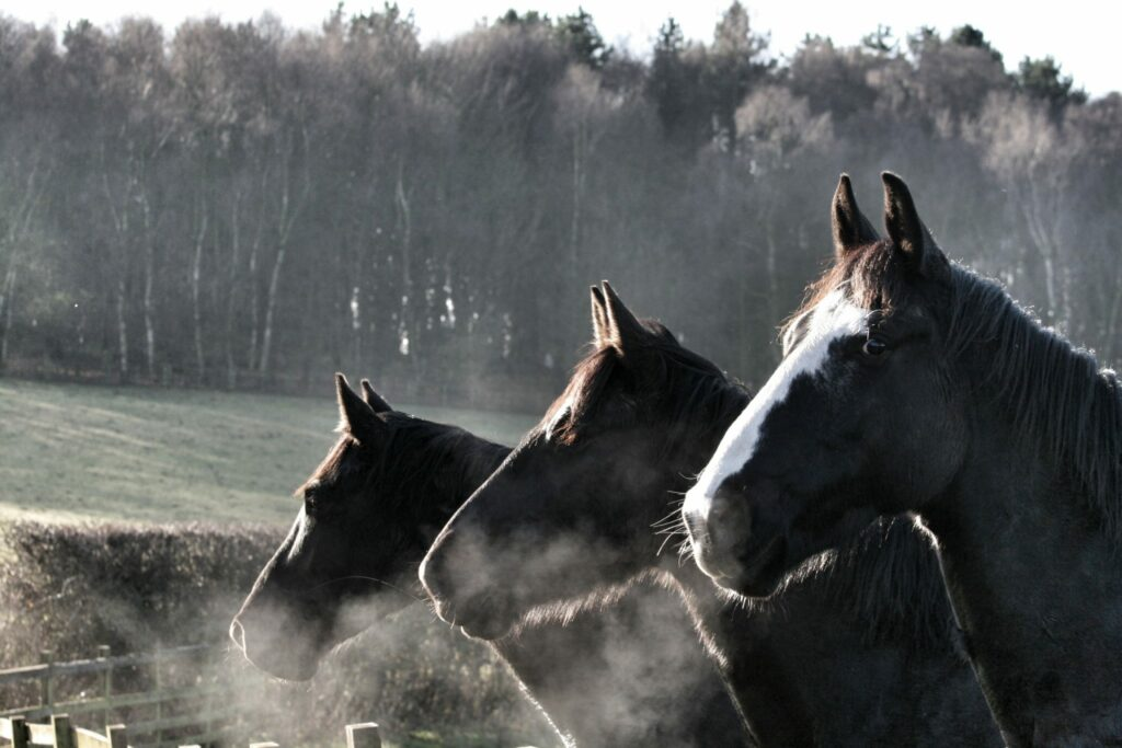 Foggy winter morning with three horses breathing fresh air