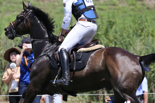 Show jumping ECG training heart rate performance