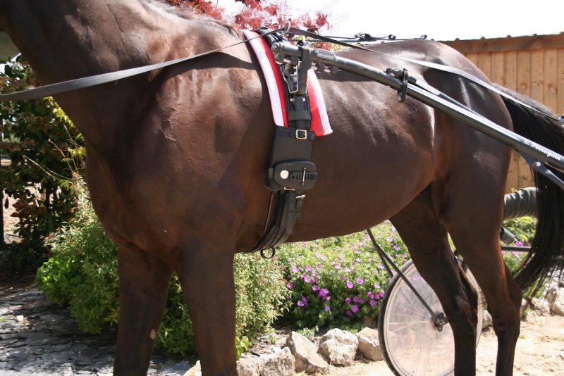 Harness racing trotting monitoring device horse heart rate monitor