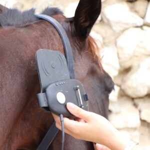 horse microchip reader veterinarian