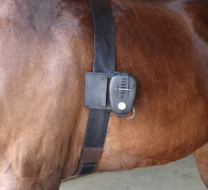 heart rate electrocardiogram horse monitoring rest