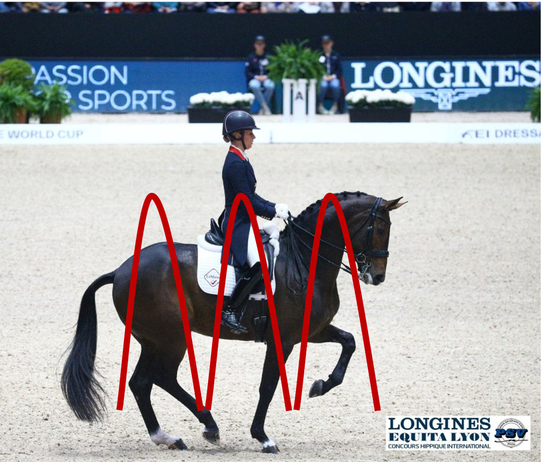 specific locomotion characteristics of the dressage horse