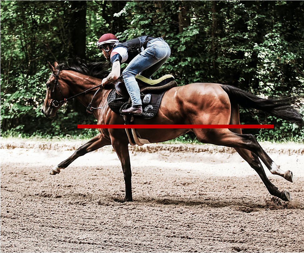 specific locomotion characteristics of the racehorse